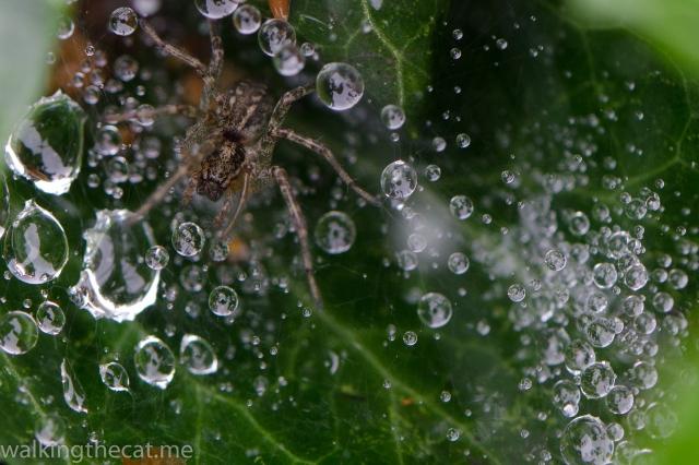 Rain spider-3572