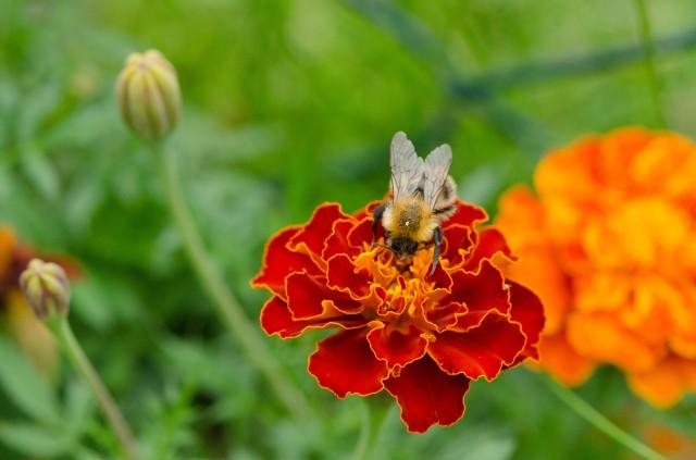 Bee (1 of 6)