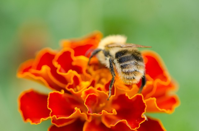 Bee (2 of 6)