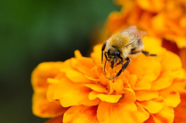 Bee (3 of 6)