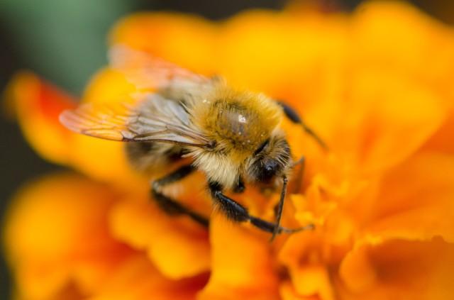 Bee (4 of 6)
