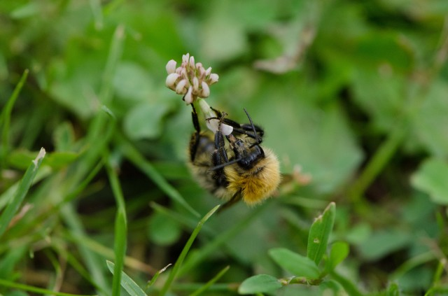 Bee (5 of 6)