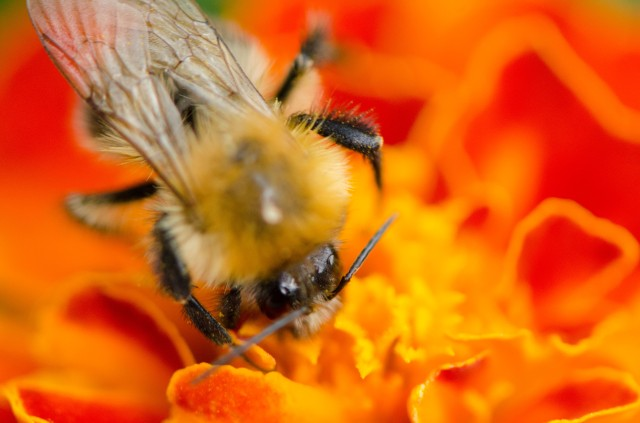 Bee (6 of 6)